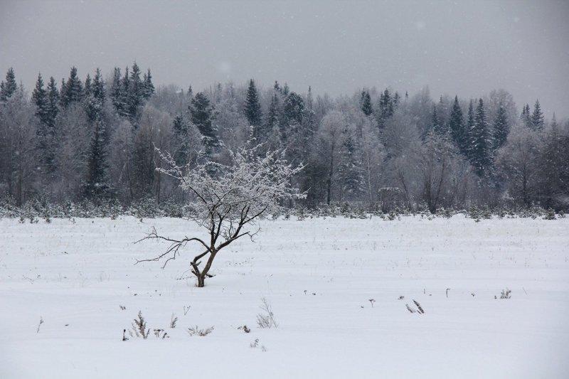 Родные просторы: несколько характерных русских пейзажей красота, поле, природа, родина, россия, русский дух, эстетика