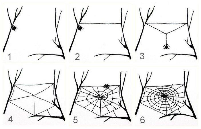 Как паук плетет  паутину? вопросы, интересное, мир, наука, познавательно, факты