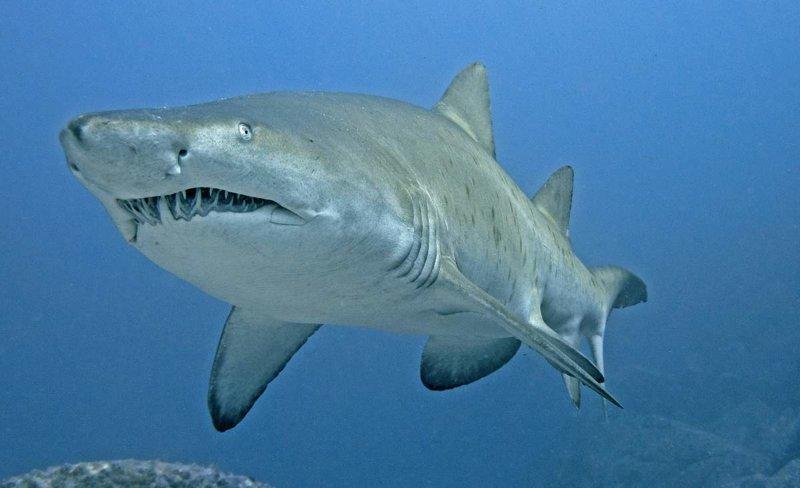 Когда акулы спят? вопросы, интересное, мир, наука, познавательно, факты