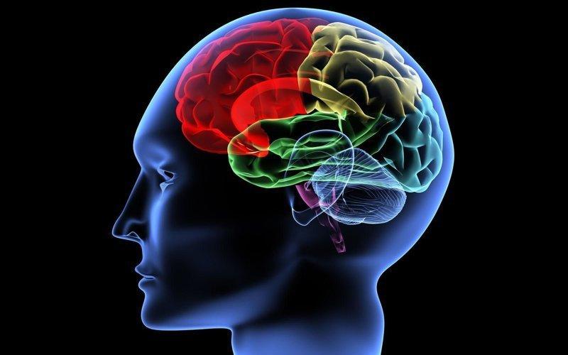 Правда ли, что мозг человека задействован на 10%? вопросы, интересное, мир, наука, познавательно, факты