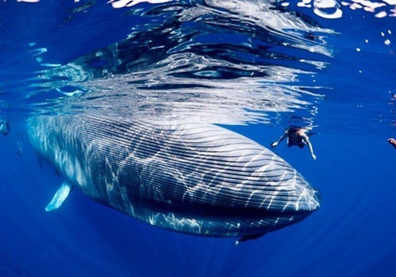 Какой толщины нервы у китов? вопросы, интересное, мир, наука, познавательно, факты
