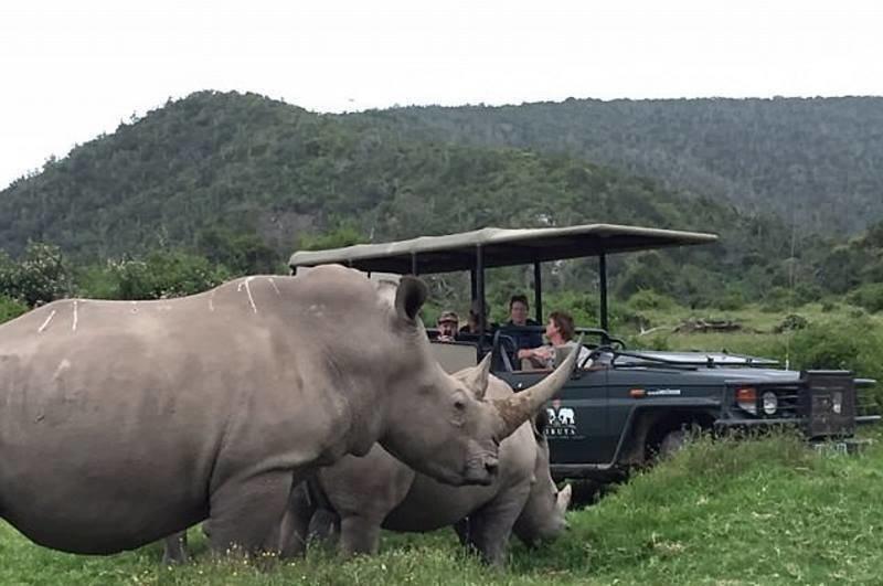 Львы съели трех браконьеров, охотившихся за рогами носорогов Льв, браконьер, в мире, животные, носорог, рога