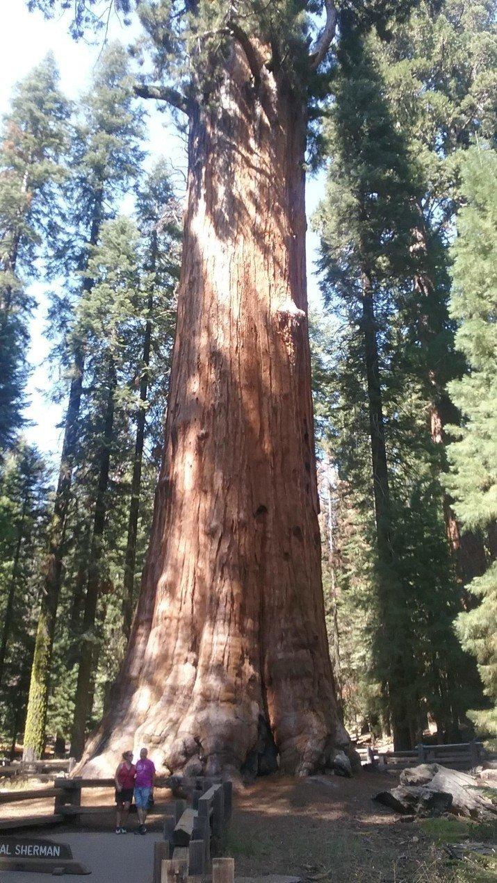 Генерал Шерман, официально самое большое дерево в мире в мире, вещи, размер, удивительно, фото
