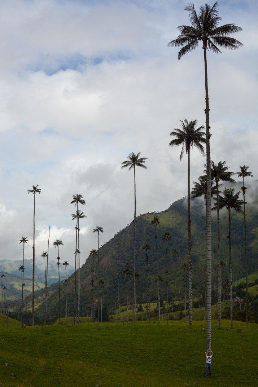 Если с такой высоты упадет кокос… в мире, вещи, размер, удивительно, фото