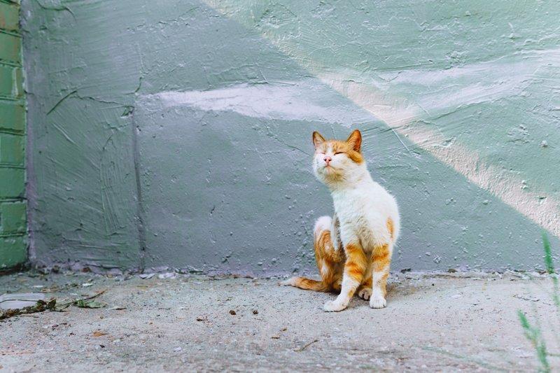 Очень колоритные уличные коты город, кот, кошки, улица, уличная жизнь, эстетика