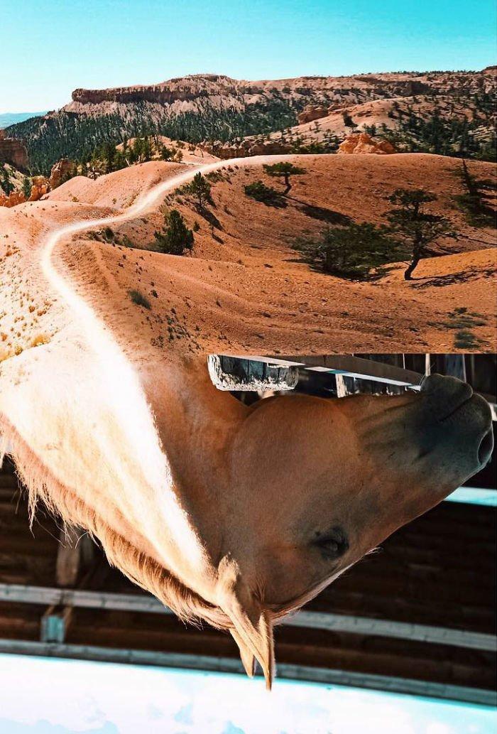 13. По пустыне на коне Моника Карвальо, работа, сюрреализм, творчество, фотография, фотомонтаж