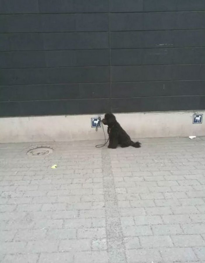 Для собак у магазинов есть специальные парковки   в мире, жизнь, идея, финляндия, это гениально