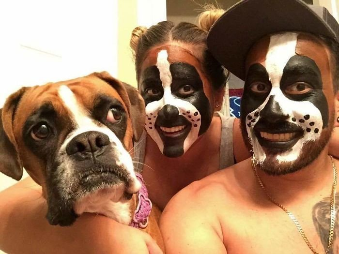 29. Хэллоуин боксеры, боксёры, домашние животные, смешные фото, смешные фотографии, собаки, собаки и хозяева, четвероногие питомцы