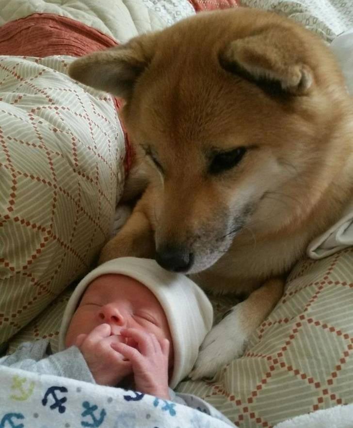 """""""Она полностью влюбилась в своего нового братика"""" история, собаки, фотографии"""