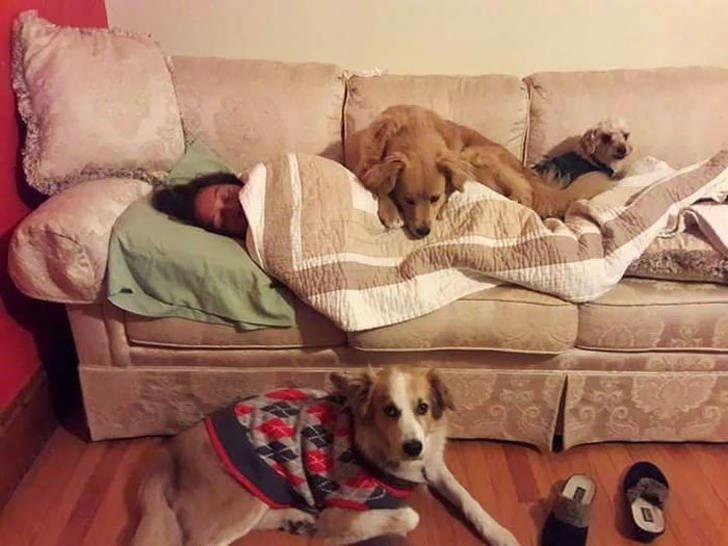 """""""Мои собаки всегда знают, когда моей маме плохо"""" история, собаки, фотографии"""