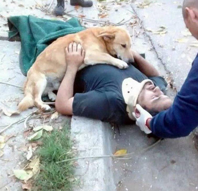 Это Тони, он отказывался оставлять хозяина, когда его ранило во время того, как он валил дерево рядом со своим домом история, собаки, фотографии