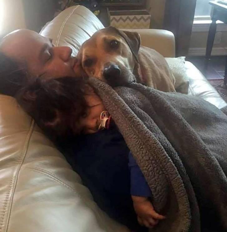 Собаки всегда знают, когда дети болеют история, собаки, фотографии