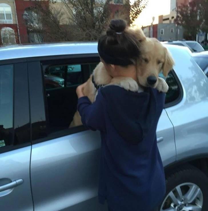 """""""Так моя собака прощается"""" история, собаки, фотографии"""