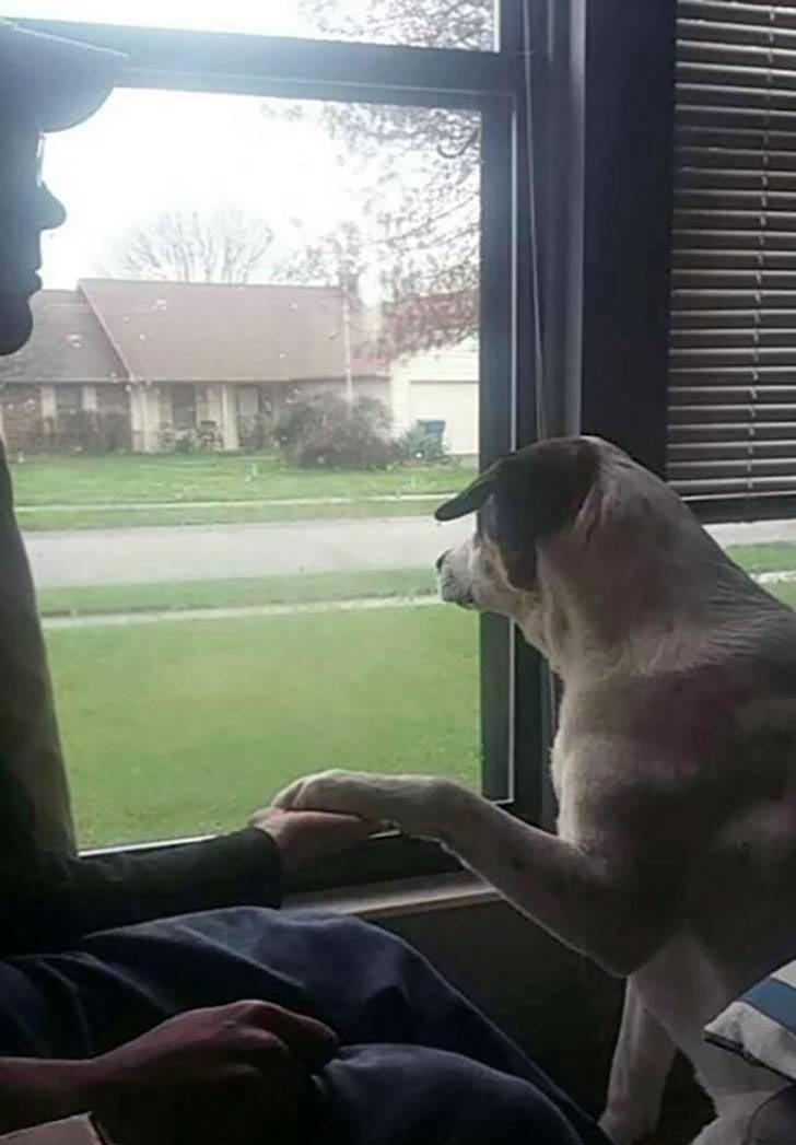 """""""Моя собака обучена реагировать на беспокойство. Когда он чувствует, что вам грустно, он заставляет вас держать свою лапу"""" история, собаки, фотографии"""