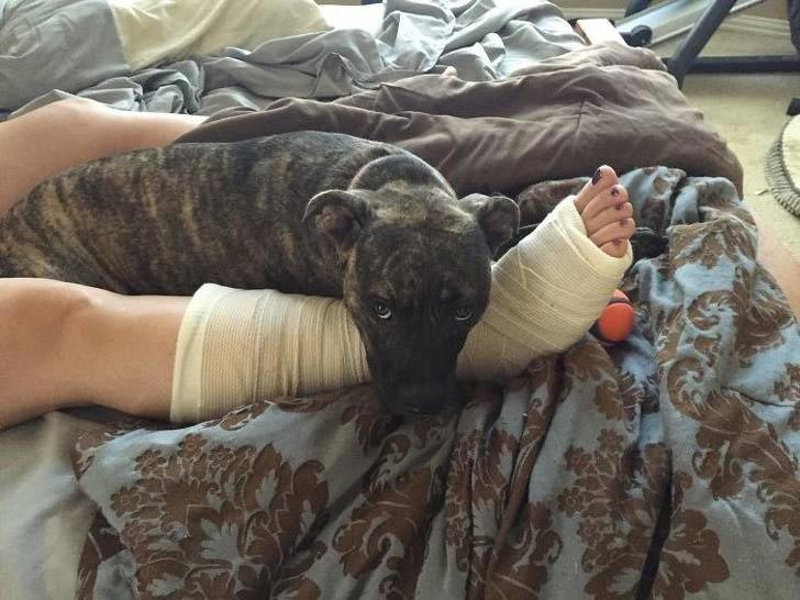"""""""Теперь сломанная нога моей жены достаточно защищена"""" история, собаки, фотографии"""