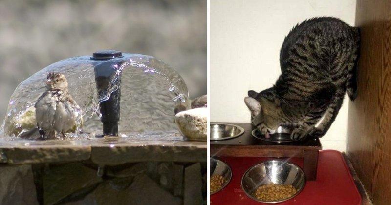 Так много мимимишности: братья наши меньшие пьют воду gif, вода, гифки, животные пьют воду, коты пьют воду, подборка, пьют воду