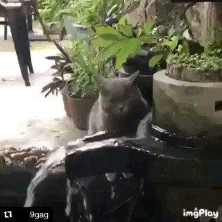 gif, вода, гифки, животные пьют воду, коты пьют воду, подборка, пьют воду