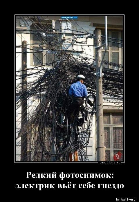 Редкий фотоснимок: электрик вьет себе гнездо демотиватор, демотиваторы, жизненно, картинки, подборка, прикол, смех, юмор