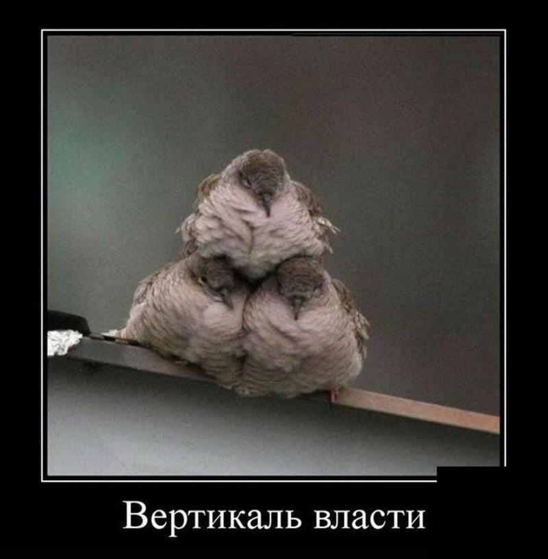 Вертикаль власти демотиватор, демотиваторы, жизненно, картинки, подборка, прикол, смех, юмор
