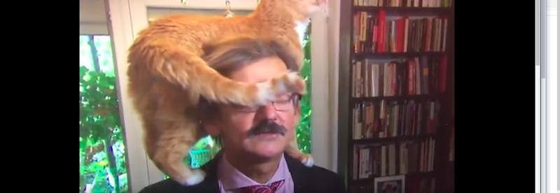 Кот сделал телевизионное интервью историка незабываемым Dr Jerzy Targalski, NTR, без кота и жизнь не та, в мире животных, видео, интервью, коты