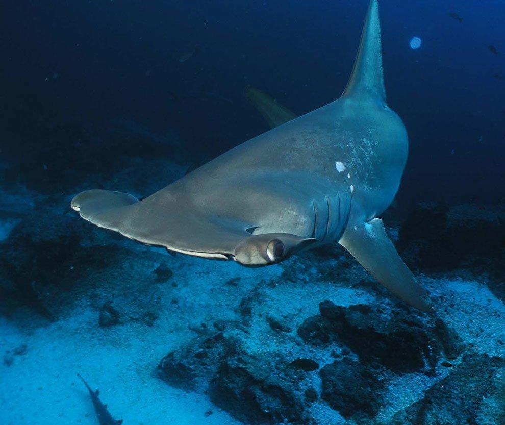 акции виды акул средиземного моря фото и название борта самолета горизонт