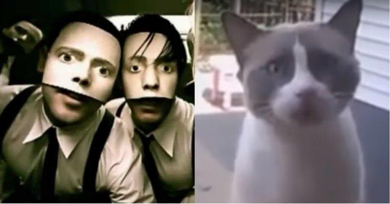 Песня Rammstein «Du Hast» в исполнении животных Du Hast, rammstein, видео, животные, кавер, музыка, пародия, юмор