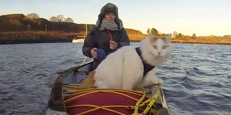 Турецкий ван по кличке Солти вместе с хозяевами живет на яхте животные, жизнь, кот, море, приключение, турецкий ван, фото, яхта
