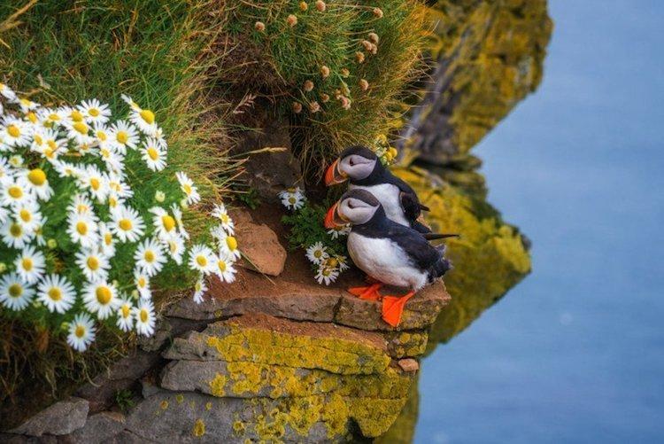 Дикая природа Исландии исландия, красота, пейзажи, природа, путешествия, туризм, фотография, фоторепортаж