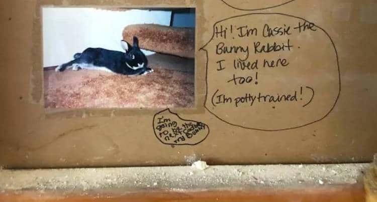 4. Кроме того, одно из посланий было от кролика из прошлого, неожиданно, послание, ремонт, странные вещи, сша, сюрприз, фото
