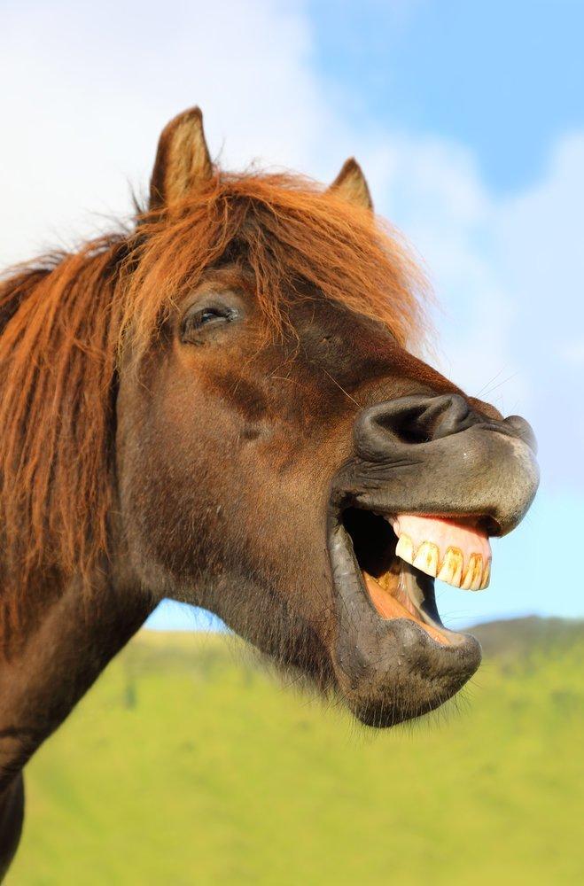 Любимая лошадь Калигула, безумие, история, культ, лошадь, факты