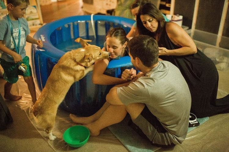 Пёс поддерживал свою хозяйку во время родов, словно человек дети, животные, история, корги, роды, семья, собака