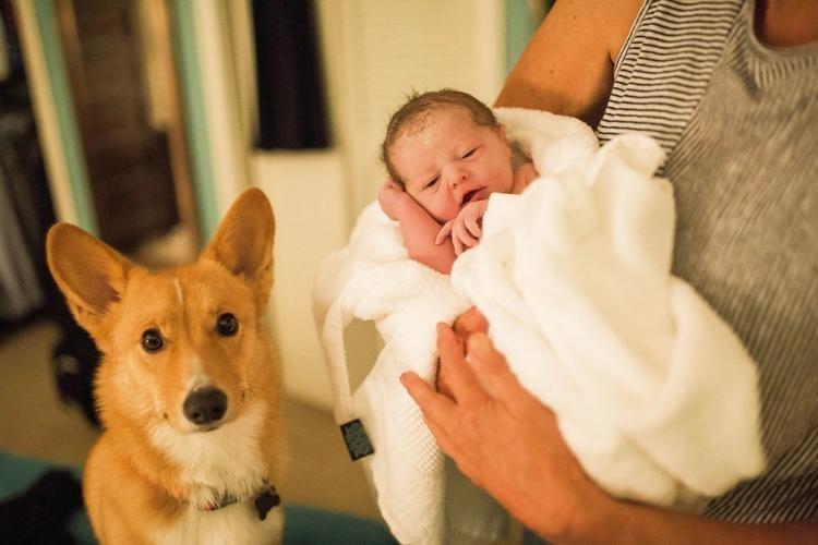 В свою очередь Брук призывает всех женщин подбирать для себя тот вариант родов, который поможет им достичь максимального эмоционального комфорта дети, животные, история, корги, роды, семья, собака