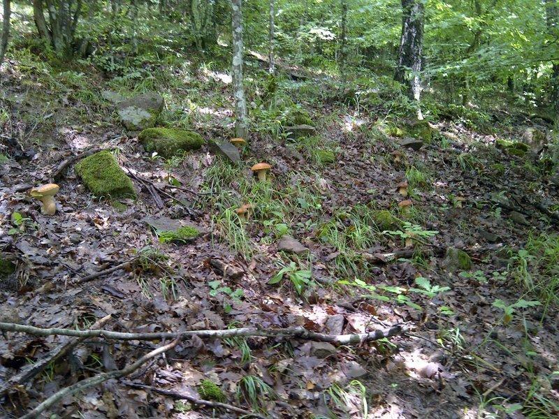 Грибы гриб, деревня, лес, поиск