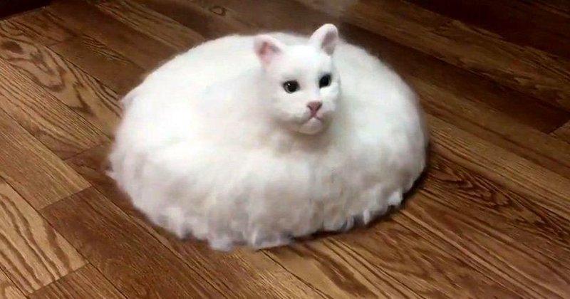 Безумный японец создал гибрид кота и пылесоса видео, изобретения, кот, коты, пылесос, своими руками, япония