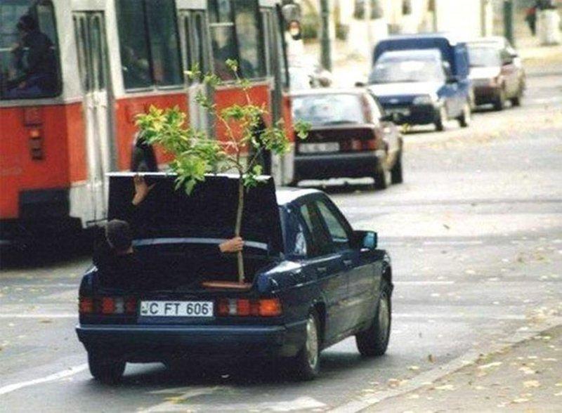 10. Самая бережная доставка дерева на свете. Впихнуть невпихуемое, люди, нелепость, перевозка грузов, талант, умелец