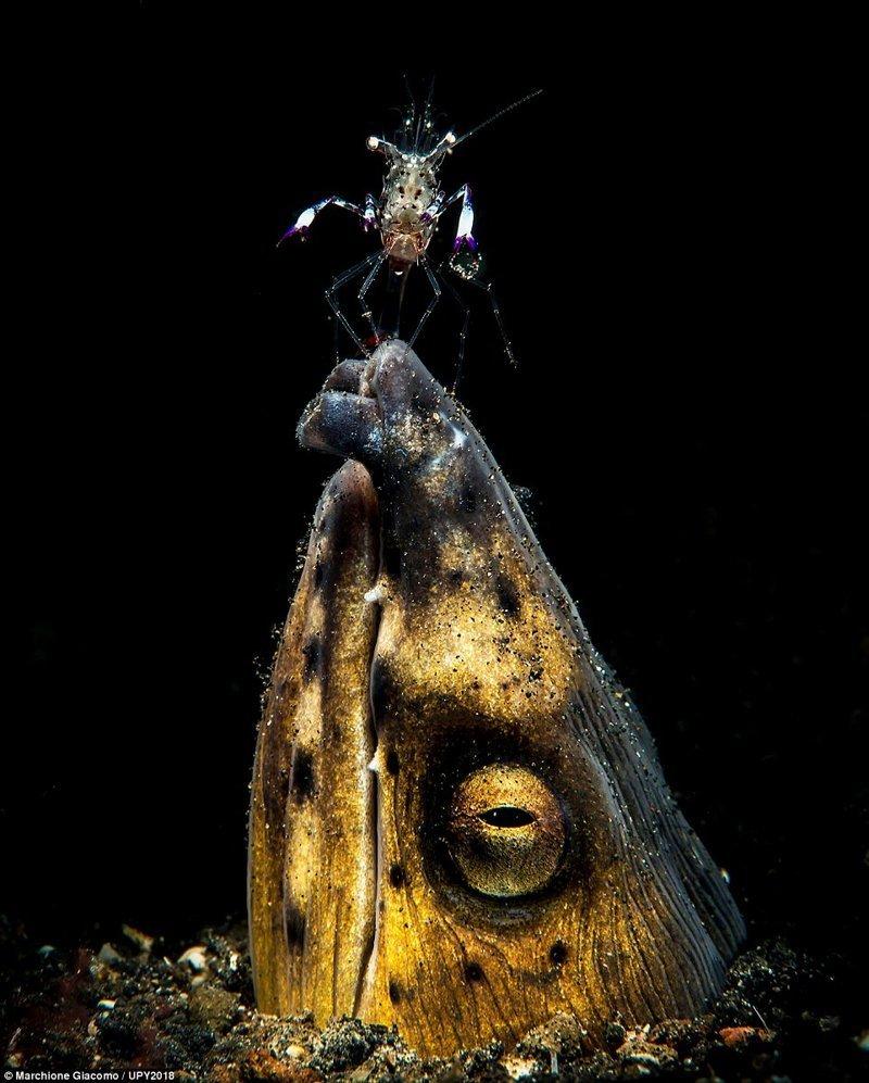 Фотограф Джакомо Марчионе конкурс, красиво, лучшее, подборка, подводные снимки, подводные фото, фото, фотографы