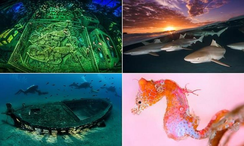 Лучшие подводные снимки с конкурса Underwater Photographer of the Year 2018 конкурс, красиво, лучшее, подборка, подводные снимки, подводные фото, фото, фотографы