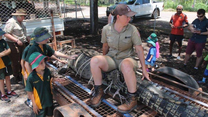 60-летнего хищника отправили на крокодиловую ферму  Северная территория, австралия, животные, крокодил, охота, река, хищник