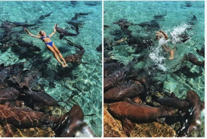 Блогершу укусила акула при попытке запилить модный лук акулы, багамы, блогер, путешественница, рискованное фото, руку за лук, травма, чрезвычайное происшествие