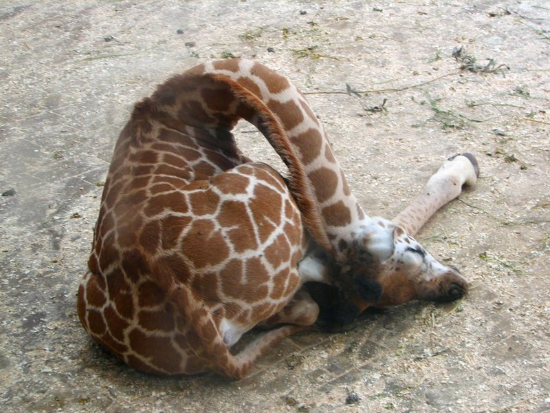 27 забавных животных, которые спасаются от жары, как могут жара, жарко, животные, забавно, забавные животные, питомцы, подборка, фото