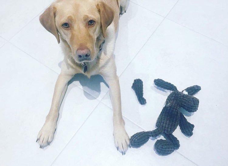 «Так уже было, когда я пришёл, правда» виноватые собаки, животные, собака раскаивается, собаки