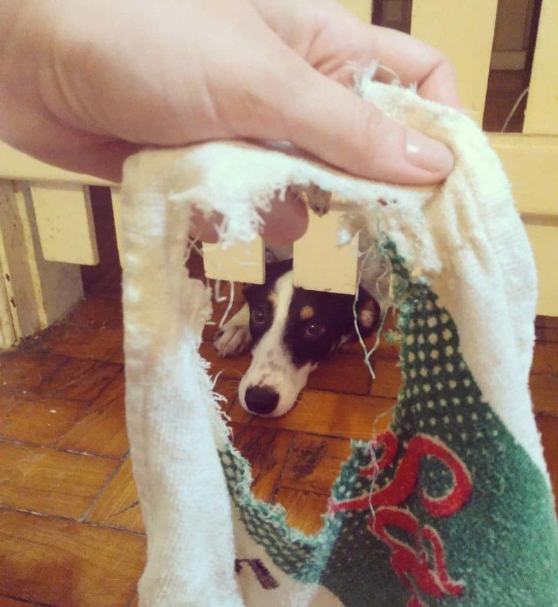 Пойман с поличным виноватые собаки, животные, собака раскаивается, собаки