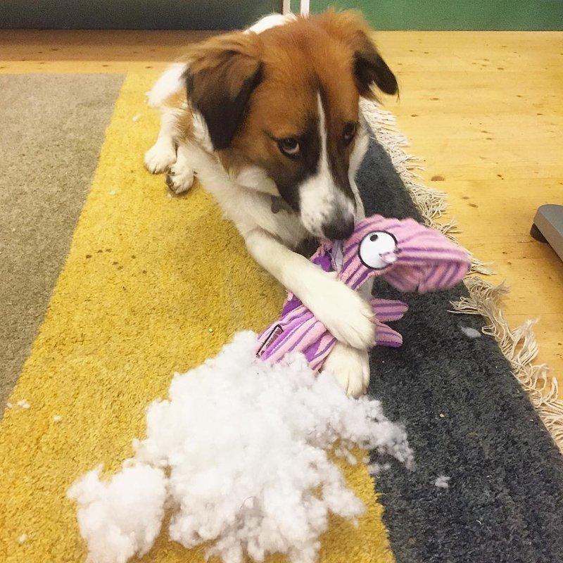 Понять и простить? виноватые собаки, животные, собака раскаивается, собаки