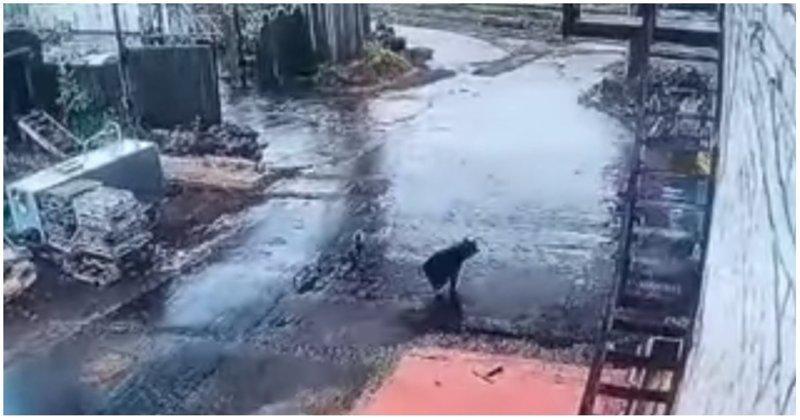 Работнику локомотивного депо удалось сбежать от медведя видео, депо, животные, медведь, повезло, россия, тында