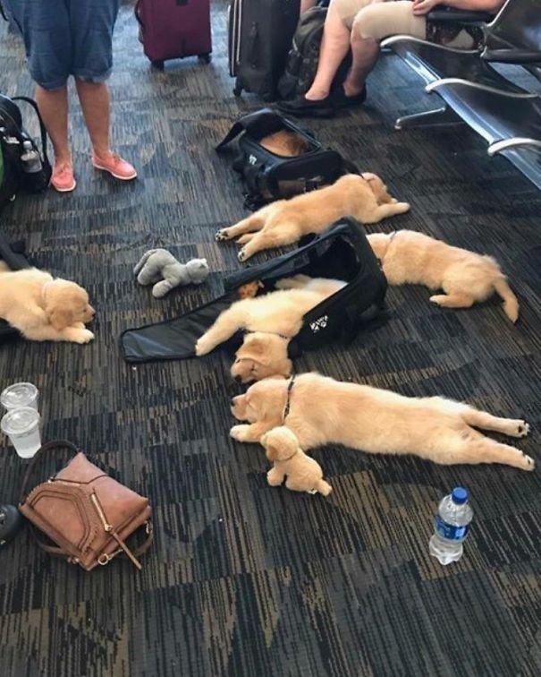 Уставшие пассажиры аэропорт, аэрошутки, багаж, забавно, забавные пассажиры, зал ожидания, смешно, юмор
