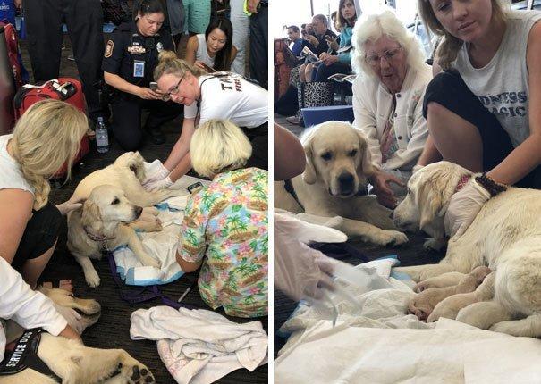 Возить собак самолетом - дело непростое! аэропорт, аэрошутки, багаж, забавно, забавные пассажиры, зал ожидания, смешно, юмор