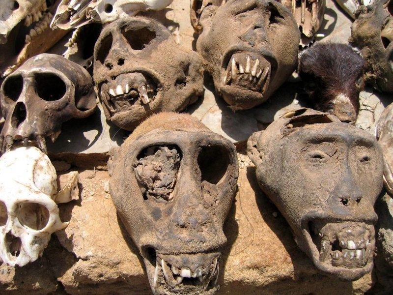 """10. Рынок амулетов """"Акодессева"""" в Того - один из самых жутких рынков в Африке. здесь продают все для ритуалов и магии вуду - от человеческих черепов и мертвых обезьян до кожи броненосцев и клювов попугаев. Жуткие фото, жутко, интересно, исторические фото, история, необъяснимое, редкие фото, фото"""