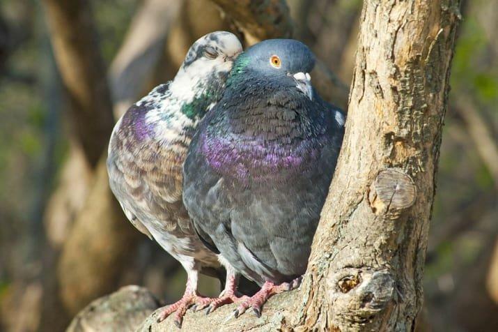 15 фотографий, которые заставят вас поверить в любовь Любовь, гармония, животный мир, красота, пары, птицы, птички, счастье