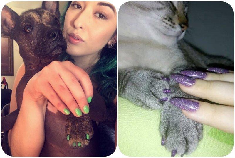 Новый флешмоб в сети: пользователи хвастаются одинаковым маникюром с питомцами животные, кошачий маникюр, маникюр, одинаковый маникюр, собачий маникюр, флешмоб, фото