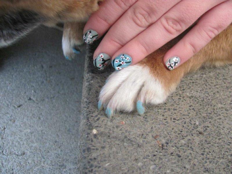 5. животные, кошачий маникюр, маникюр, одинаковый маникюр, собачий маникюр, флешмоб, фото